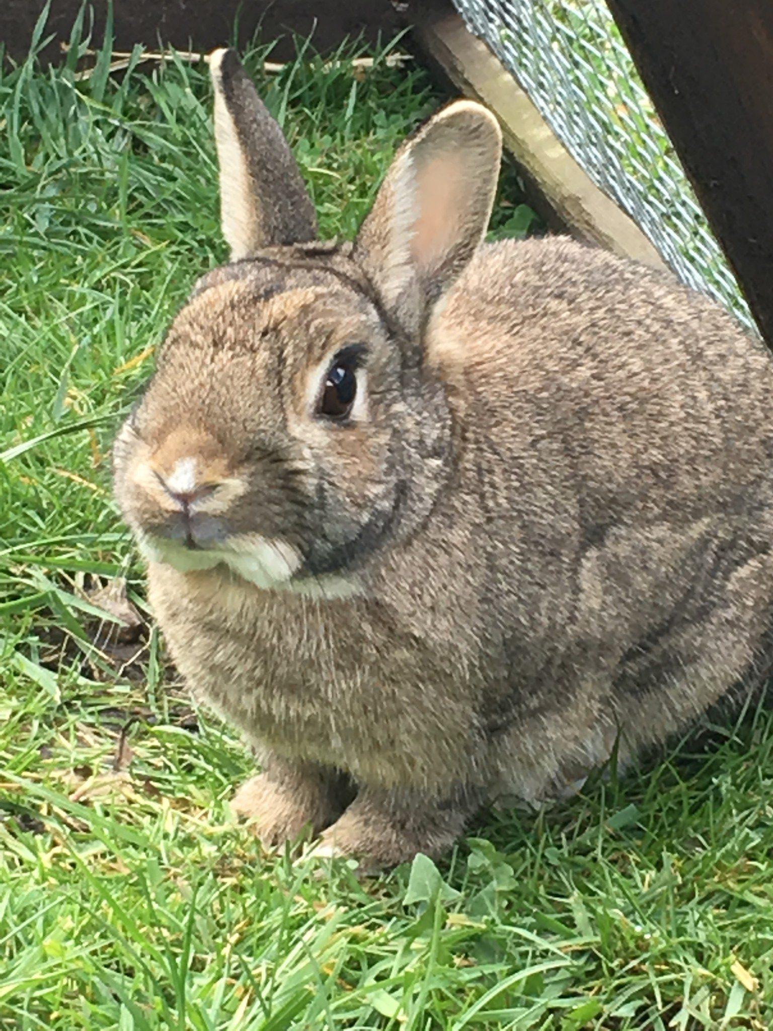 photo of boarding rabbit