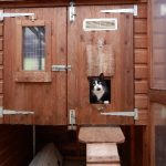 cattery in Altrincham
